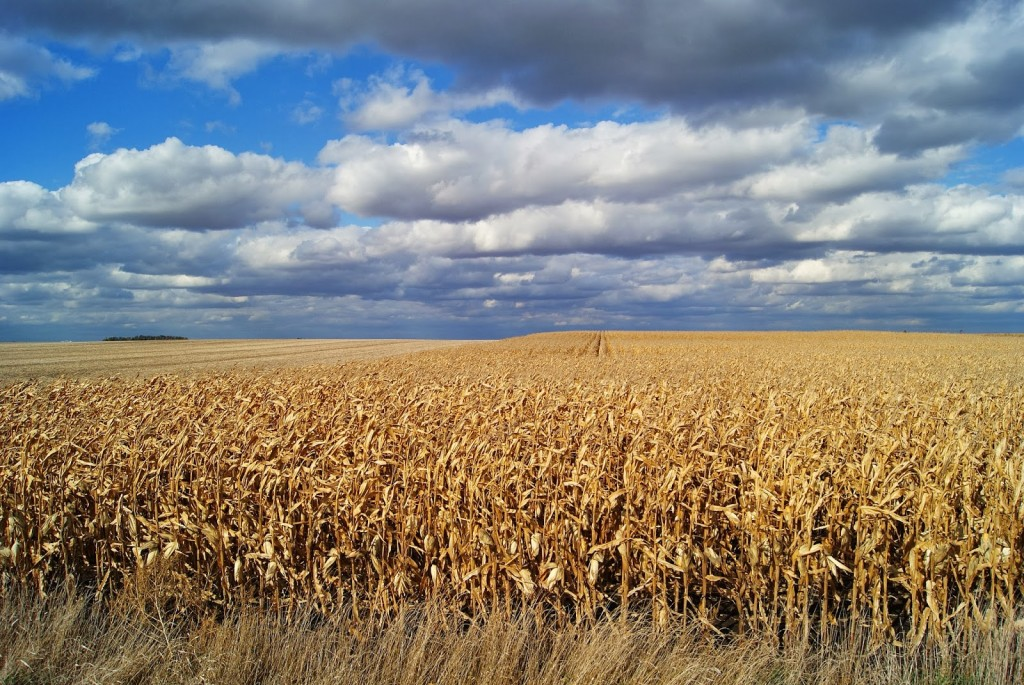 Iowa_cornfields_Markel-Peters