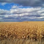 Iowa_cornfields_Markel-Peters